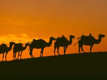 """غناء الإِبل """"الحُداء"""": فنّ العرب الأقدم الذي أحبّه رسول الإسلام ومارسه عددٌ من الصحابة"""
