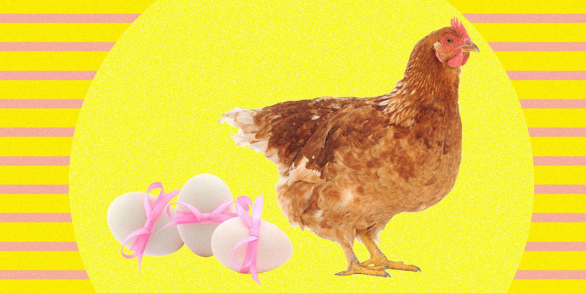 في اليوم العالمي للسرطان..بيض دجاج معدل وراثياً قد يكون العلاج